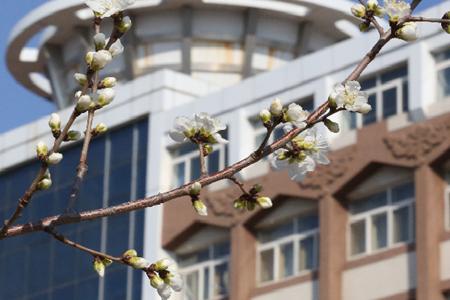 内蒙古民族大学2020年艺术类专业招生简章
