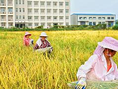 华中农业大学专业介绍